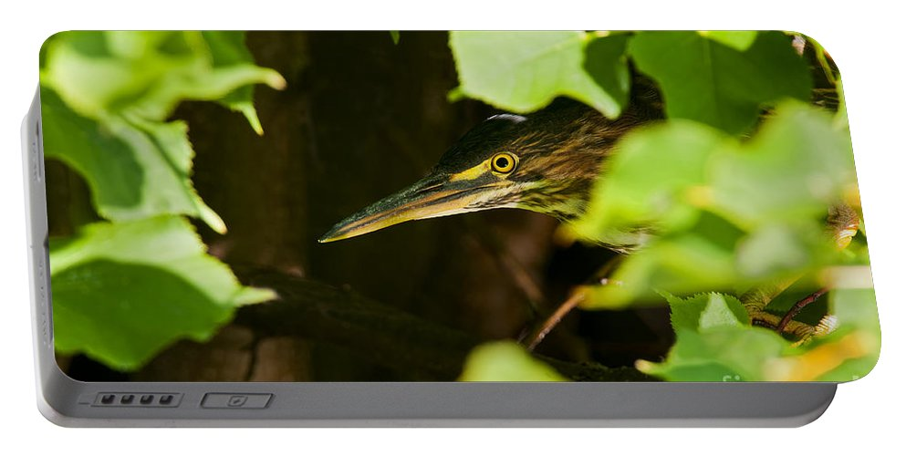 Green Heron Portable Battery Charger featuring the photograph Green Heron Pictures 430 by World Wildlife Photography