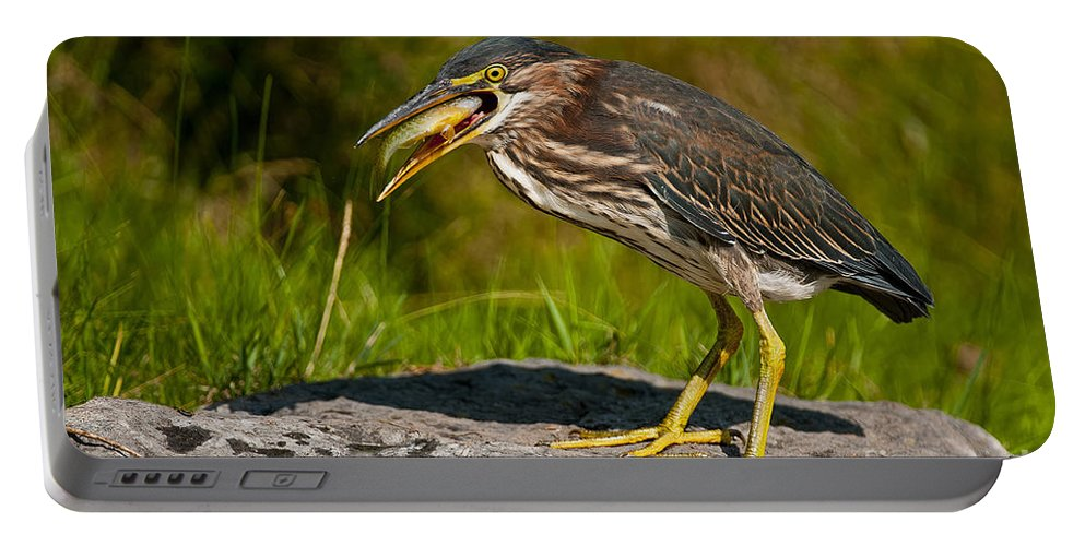 Green Heron Portable Battery Charger featuring the photograph Green Heron Pictures 457 by World Wildlife Photography