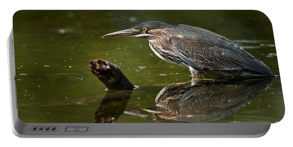 Green Heron Portable Battery Charger featuring the photograph Green Heron Pictures 491 by World Wildlife Photography