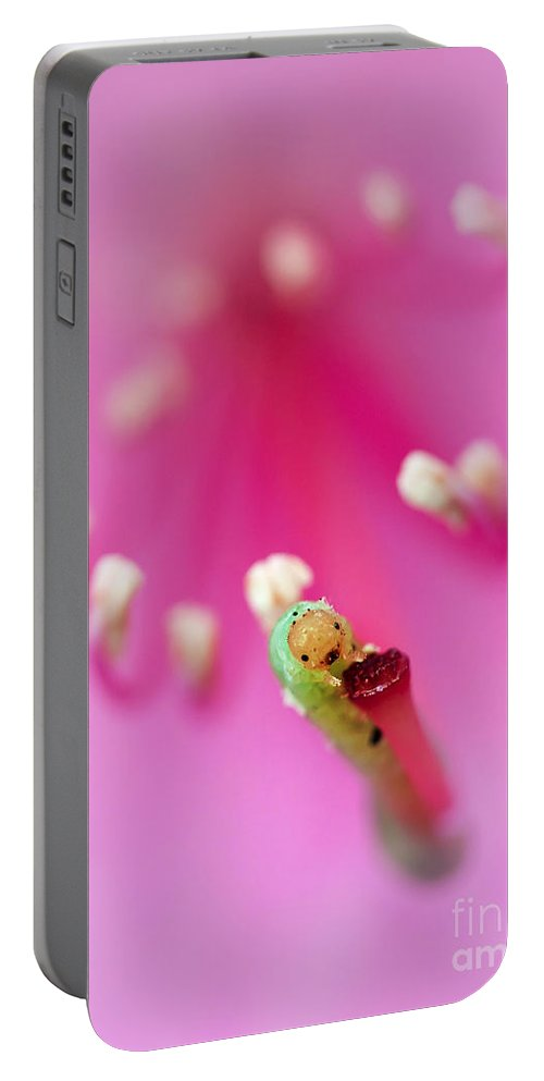 Flower Portable Battery Charger featuring the photograph Green Jelly On A Rhododendron by Jaroslaw Blaminsky