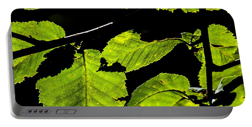 Green Leaves Portable Battery Charger featuring the photograph Green Leaves by Karol Livote