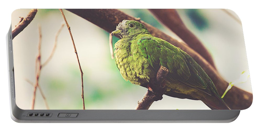 Wildlife Portable Battery Charger featuring the photograph Green Pigeon by Pati Photography