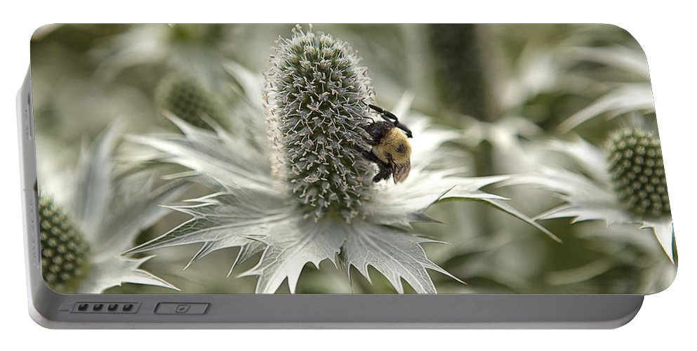 Thistle Portable Battery Charger featuring the photograph Green Thistle by Eunice Gibb