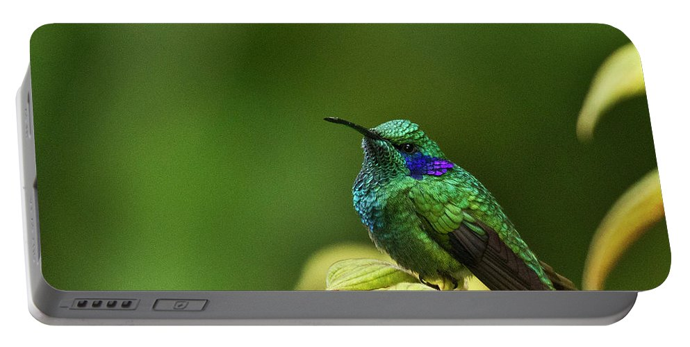 Bird Portable Battery Charger featuring the photograph Green Violetear Hummingbird by Heiko Koehrer-Wagner
