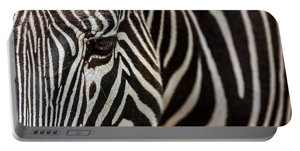 Gr�vy's Zebra Portable Battery Charger featuring the photograph Grevy's Zebra 4 by Arterra Picture Library
