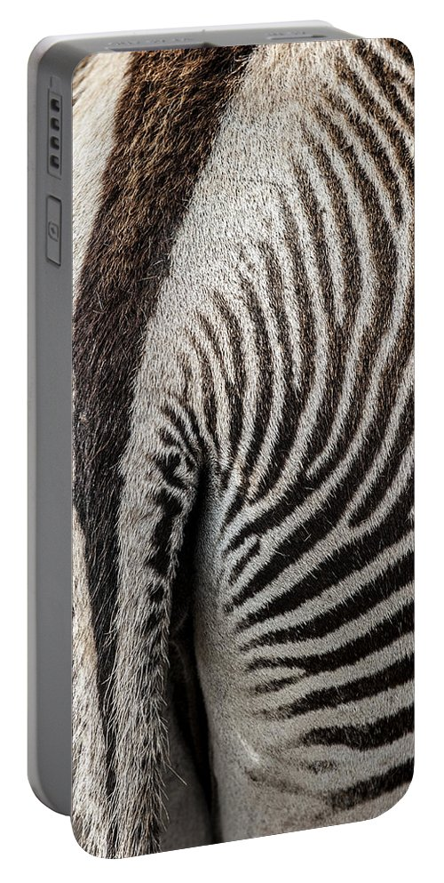 Grevy's Zebra Portable Battery Charger featuring the photograph Grevy's Zebra 5 by Arterra Picture Library