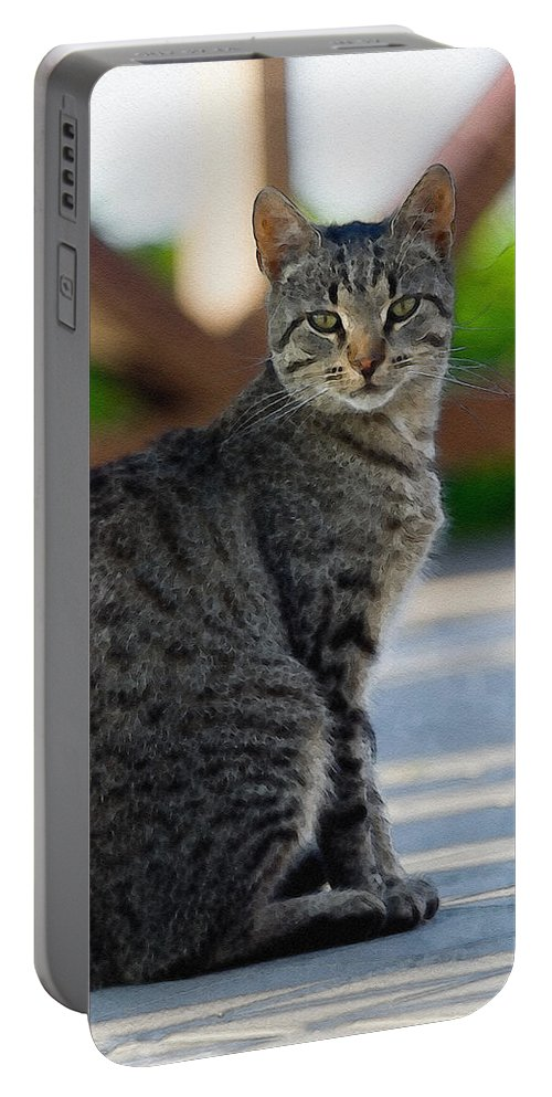 Cat Portable Battery Charger featuring the photograph Grey Cat by Pati Photography