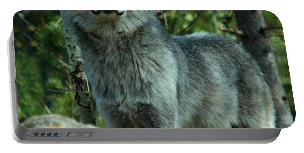 Wolf Portable Battery Charger featuring the photograph North American Wolf by Aidan Moran