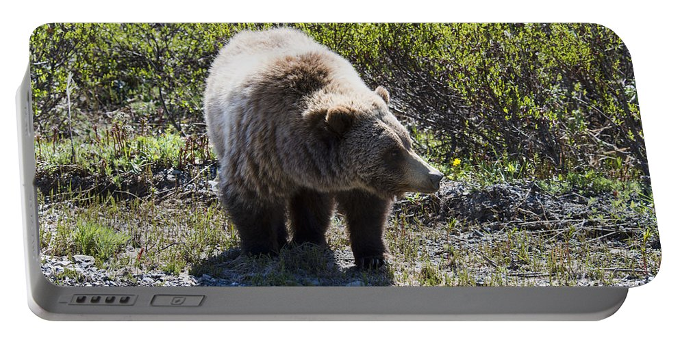Grizzly Portable Battery Charger featuring the photograph Grizzly Bear by David Arment