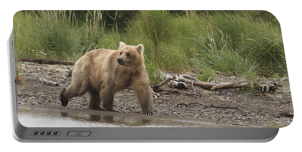Alaska Portable Battery Charger featuring the photograph Grizzly by Dee Carpenter
