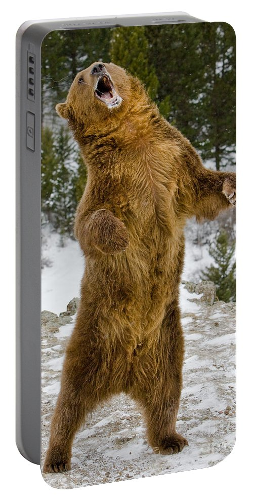 Grizzly Bear Portable Battery Charger featuring the photograph Grizzly Standing by Jerry Fornarotto