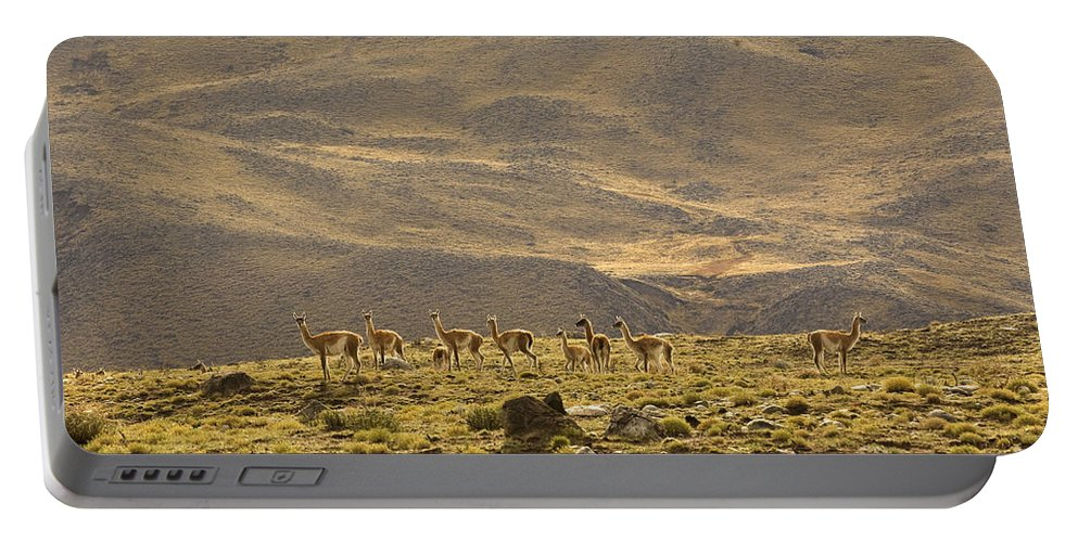 Guanaco Portable Battery Charger featuring the photograph Guanaco Herd, Argentina by John Shaw