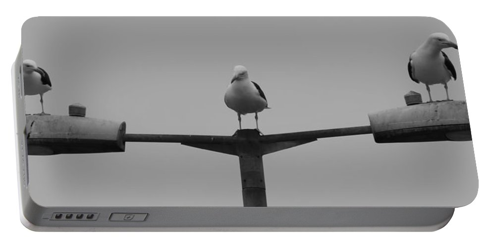 Sea Gull Portable Battery Charger featuring the photograph Gull Commanders by Robert Phelan