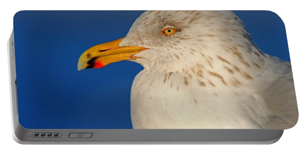Gull Portable Battery Charger featuring the photograph Gull Portrait by Dave Mills