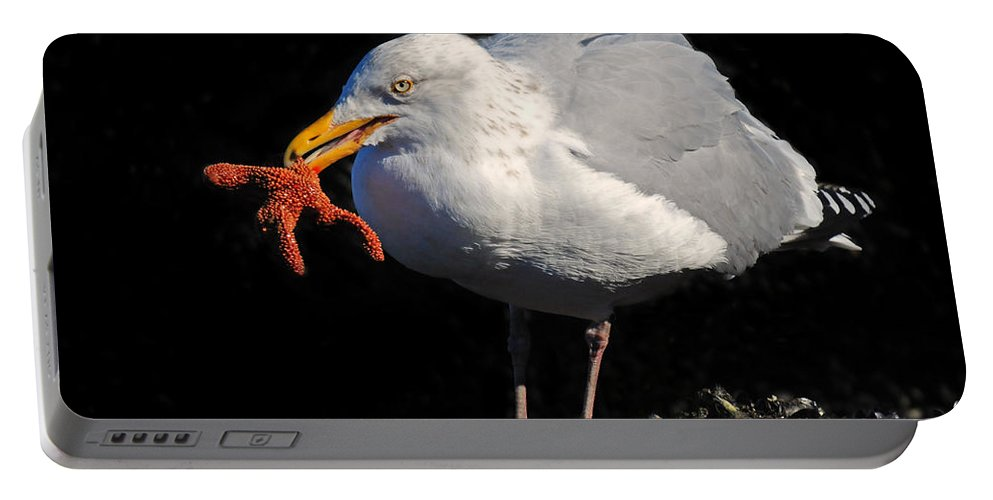 Gull Portable Battery Charger featuring the photograph Gull With Starfish by Dave Mills