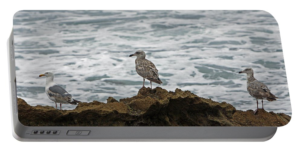 Sea Gulls Portable Battery Charger featuring the photograph Gulls Podium by Shoal Hollingsworth