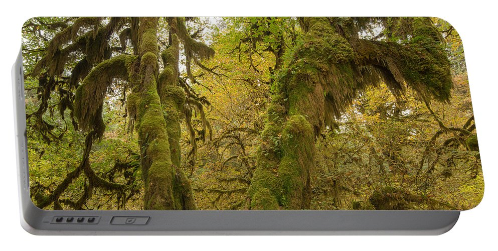 Ferns Portable Battery Charger featuring the photograph Hall Of Mosses 3 by Tracy Knauer