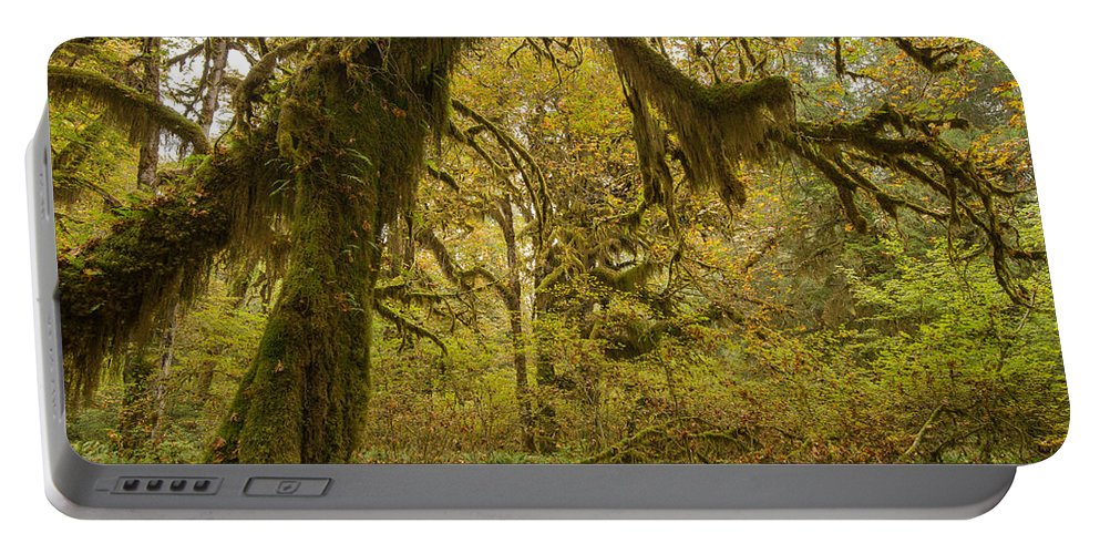 Ferns Portable Battery Charger featuring the photograph Hall Of Mosses 5 by Tracy Knauer