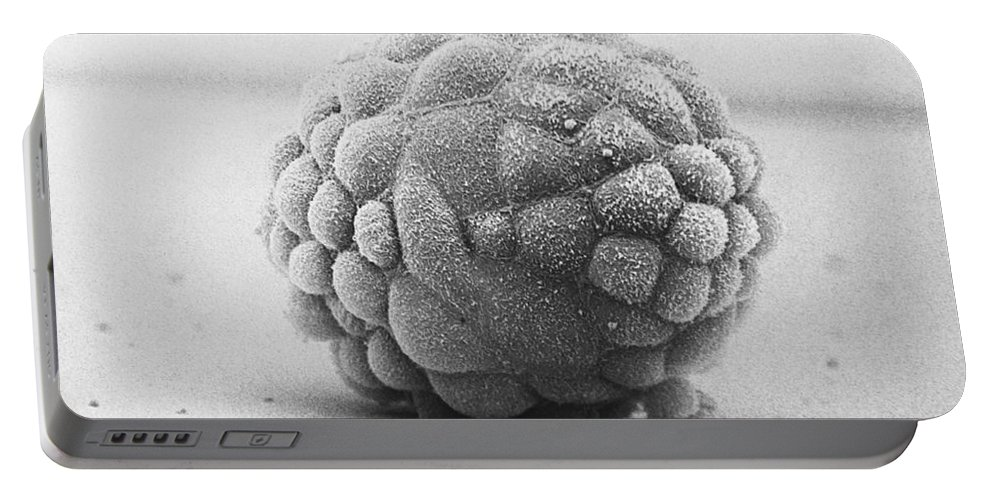 Science Portable Battery Charger featuring the photograph Hamster Embryo Sem by David M. Phillips