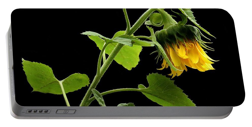 Sunflower Portable Battery Charger featuring the photograph Hang Down Your Head by Rebecca Morgan