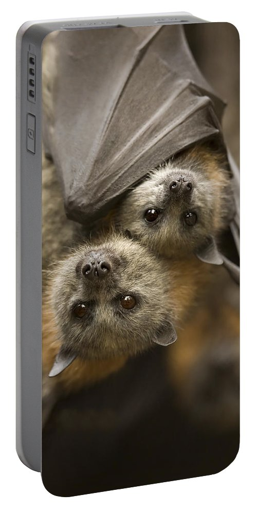 Bats Portable Battery Charger featuring the photograph Hang In There by Mike Dawson
