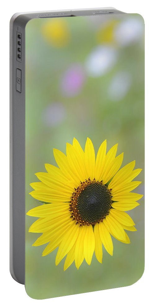 Flower Portable Battery Charger featuring the photograph Hanging In There by Jean-Pierre Ducondi