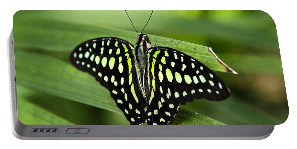 Tailed Green Jay Butterfly Portable Battery Charger featuring the photograph Hanging On by Saija Lehtonen