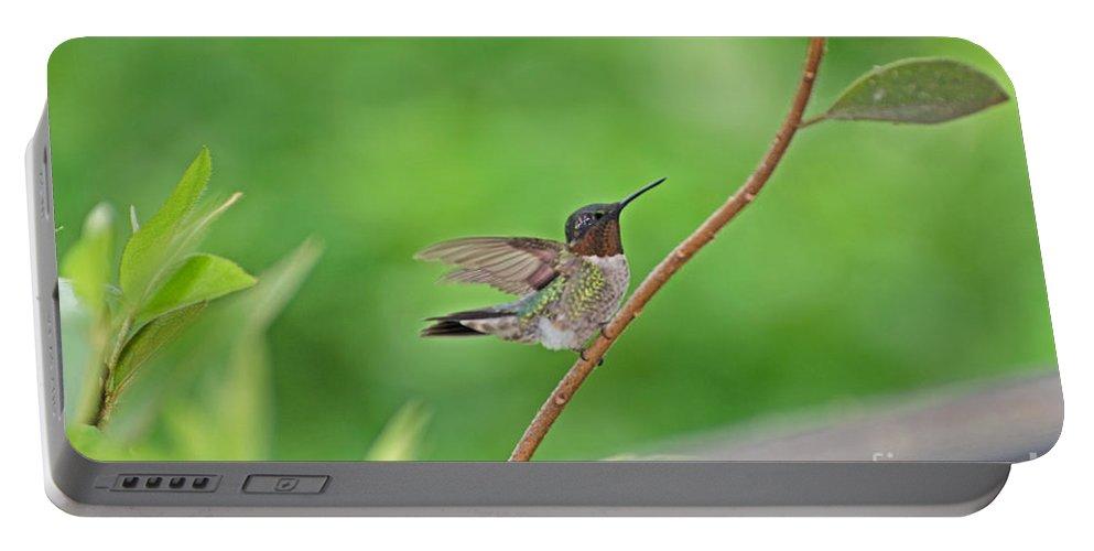 Bird Portable Battery Charger featuring the photograph Happy As A Hummer by Donna Brown