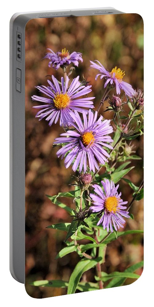 Asters Portable Battery Charger featuring the photograph Happy Asters by Valerie Kirkwood
