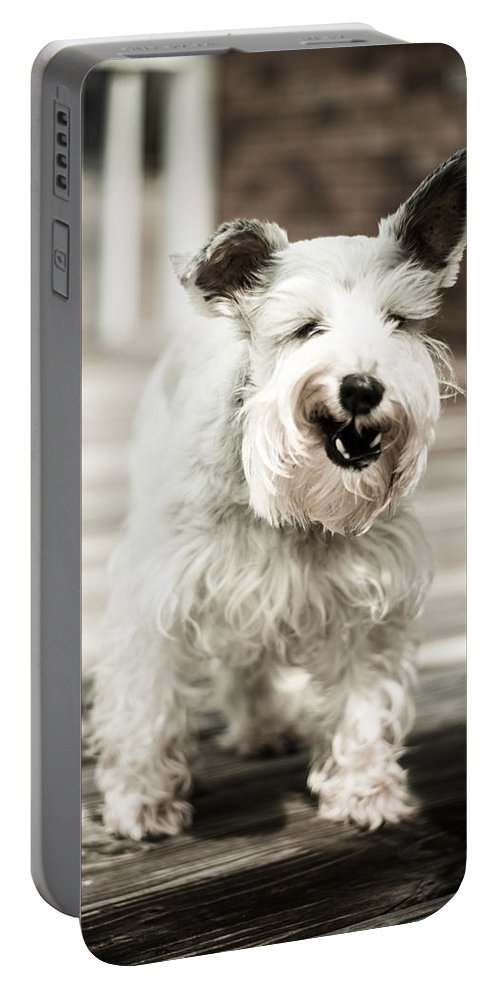 Happy Portable Battery Charger featuring the photograph Happy Dog by Jon Cody