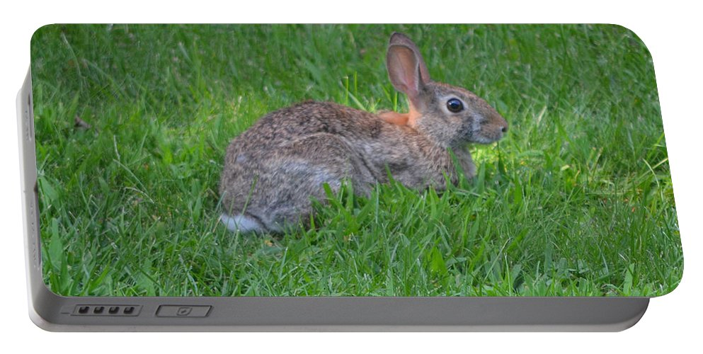 Wild Portable Battery Charger featuring the photograph Happy Rabbit by Richard Bryce and Family