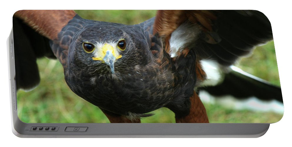 Harris Hawk Portable Battery Charger featuring the photograph Harris Hawk by Chris Day