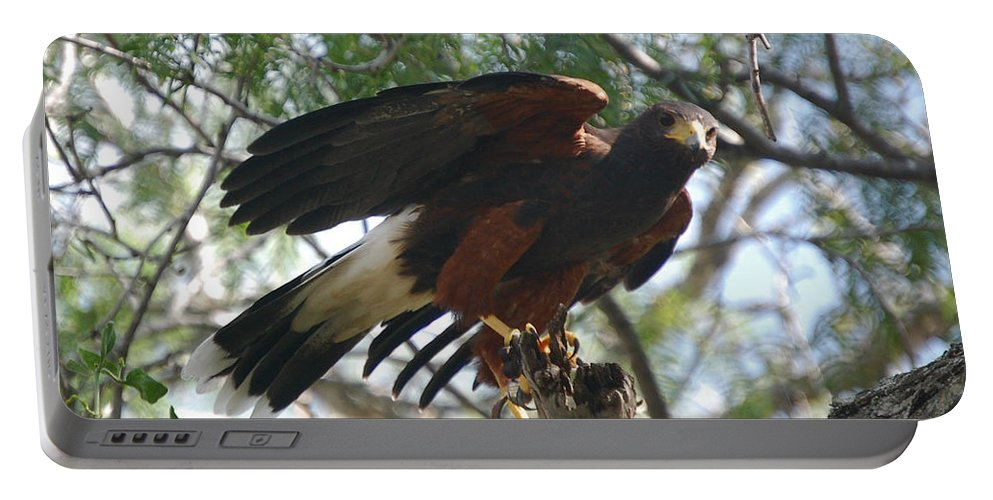 Harris Portable Battery Charger featuring the photograph Harris Hawk by Leticia Latocki