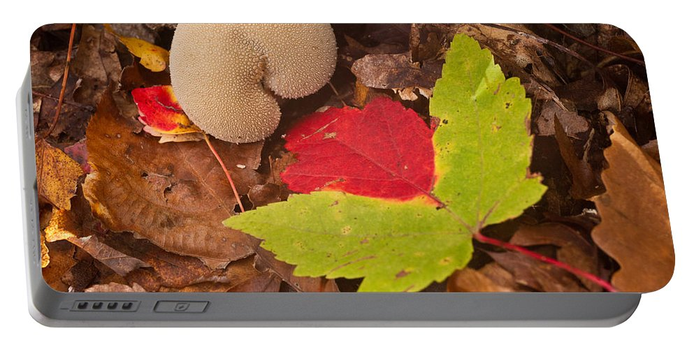 Fungi Portable Battery Charger featuring the photograph Hart Of A Puff Ball by Douglas Barnett