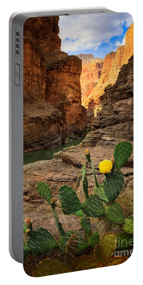 America Portable Battery Charger featuring the photograph Havasu Cactus by Inge Johnsson