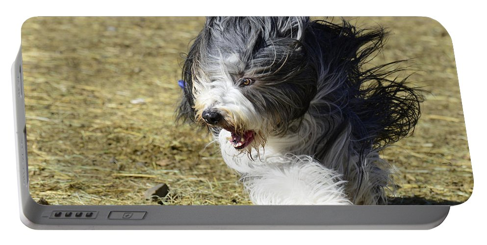 Dog Portable Battery Charger featuring the photograph Having A Bad Hair Day by Dianne Phelps