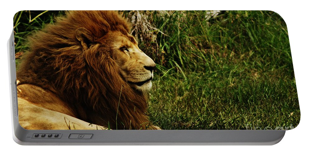 Lion Portable Battery Charger featuring the photograph Having A Break by Ben Yassa