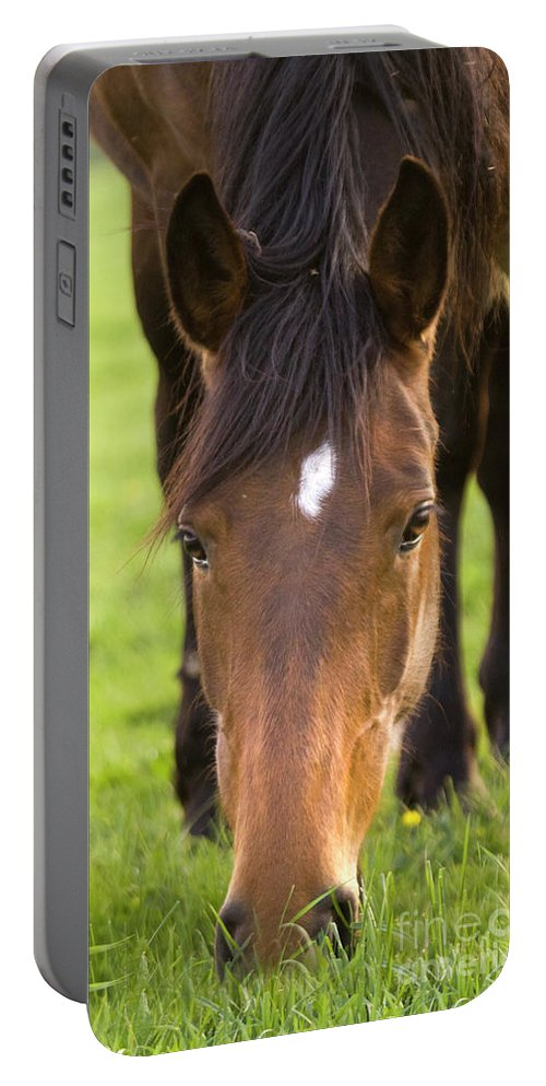 Horse Portable Battery Charger featuring the photograph Having A Lunch by Angel Ciesniarska