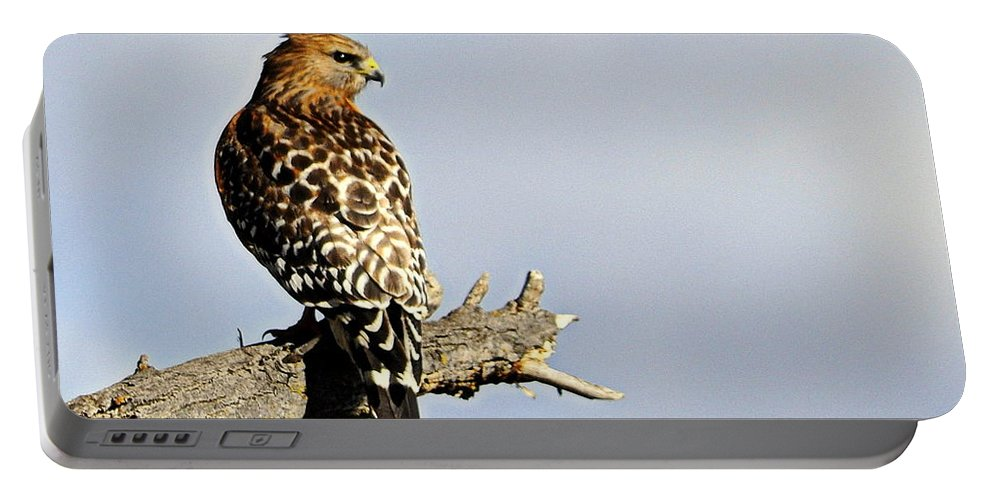 Birds Portable Battery Charger featuring the photograph Hawk Looking Back by AJ Schibig