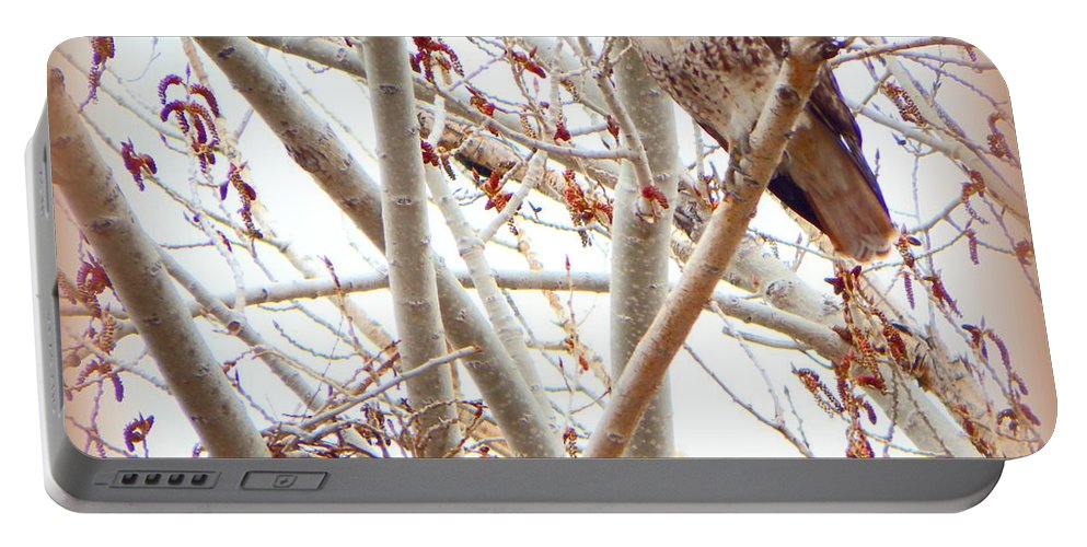 Acrylic Prints Portable Battery Charger featuring the photograph Hawk Nesting IIi by Bobbee Rickard