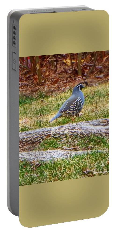 Acrylic Prints Portable Battery Charger featuring the photograph Quail Scout by Bobbee Rickard