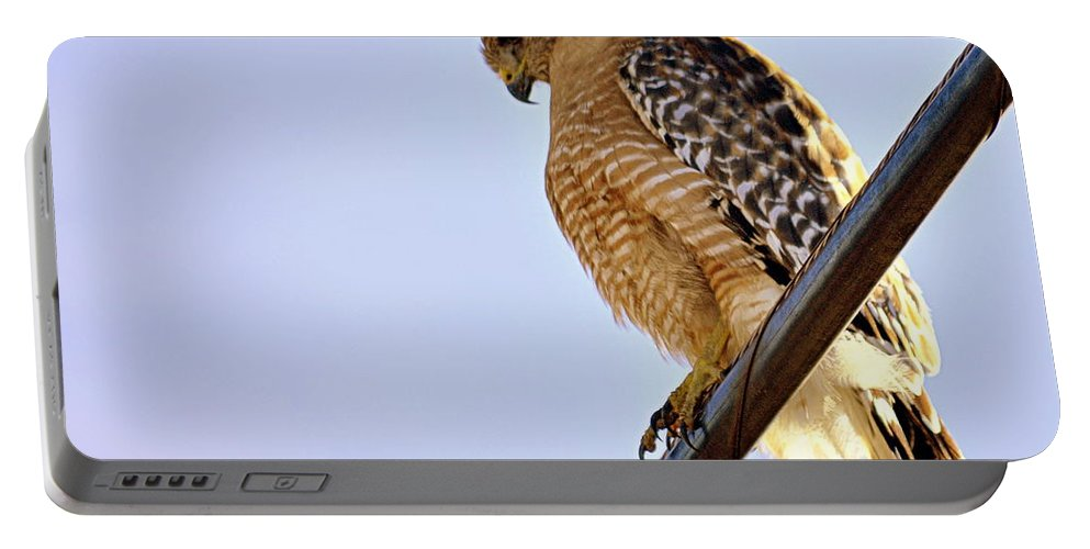 Bird Portable Battery Charger featuring the photograph Hawkeye by AJ Schibig