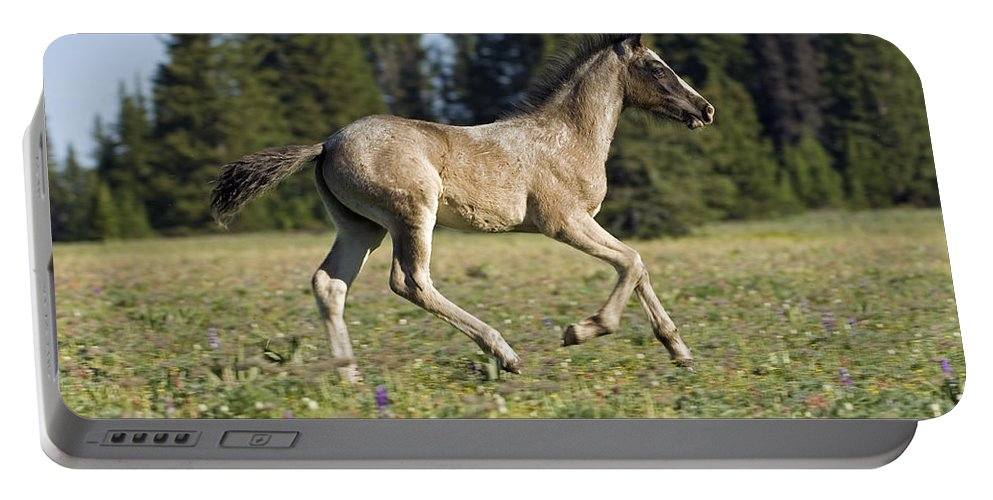 Horse Portable Battery Charger featuring the photograph Heading Out by Wildlife Fine Art