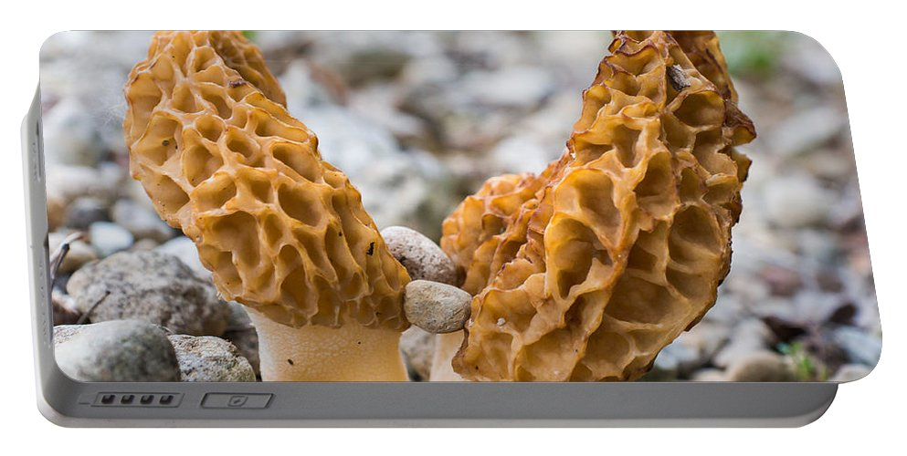 Bill Pevlor Portable Battery Charger featuring the photograph Heavy Lifting Morels by Bill Pevlor