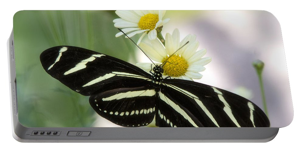 Heliconius Charithonia Portable Battery Charger featuring the photograph Heliconius Charithonia by Saija Lehtonen
