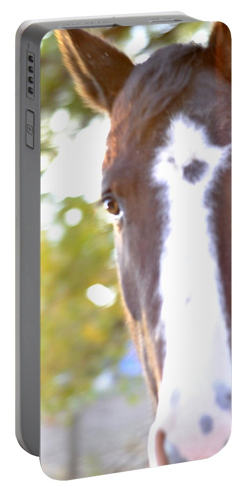 Horse Portable Battery Charger featuring the photograph Hello by Pam Romjue