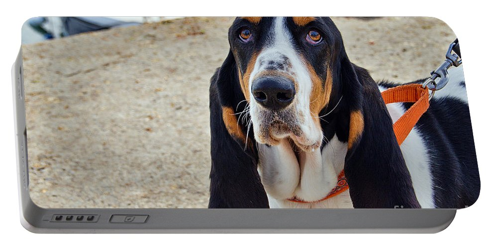Henry Portable Battery Charger featuring the photograph Henry The Basset by Susie Peek
