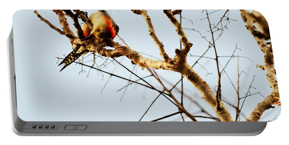 Woodpecker Portable Battery Charger featuring the photograph He's Looking At Me by Linda Kerkau