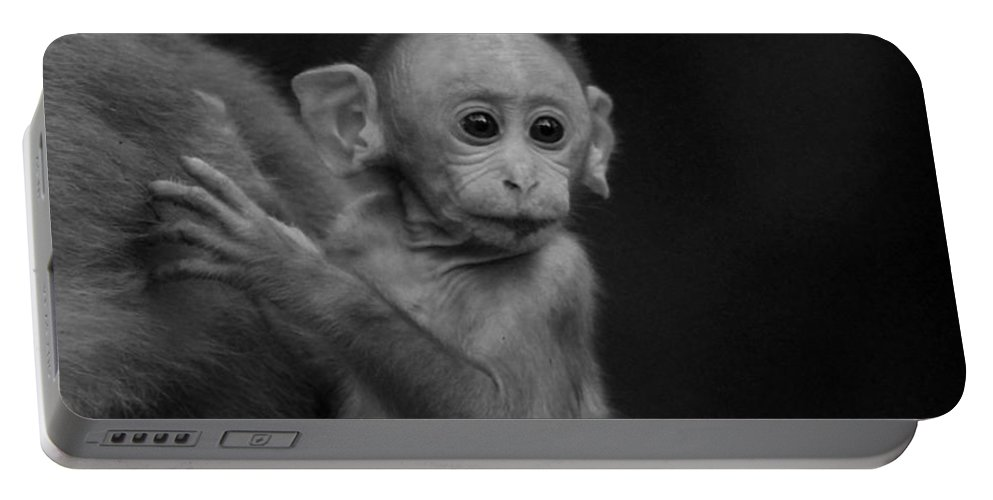 Baby Monkey Portable Battery Charger featuring the photograph Hey Mom Look What Is There by Ramabhadran Thirupattur