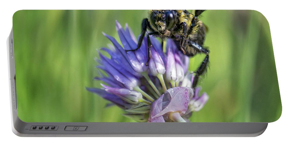 Bumblebee Portable Battery Charger featuring the photograph Hi There by Claudia Kuhn